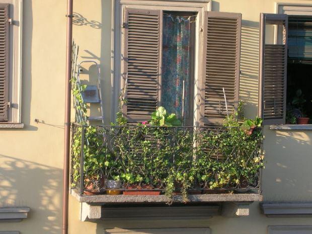 Malá zelená oáza: Zimní zahrada se dá vytvořit i na balkoně