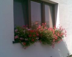 Květiny na okna po zateplení