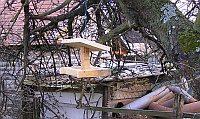 Výroba krmítka pro ptáky