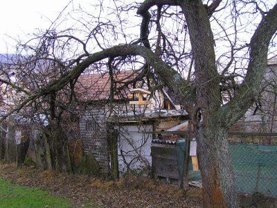 strom s krmítkem