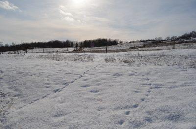 sníh a zahrada