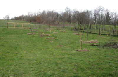 staré stromy v nové zahradě