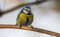 Ptáčci opět nalétávají na síťky na oknech