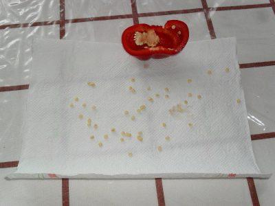 Vyklíčí jen semena ze zralé papriky
