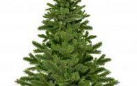 Ekologické Vánoce: stromeček živý nebo umělý?