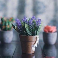 K čemu jsou pokojové rostliny